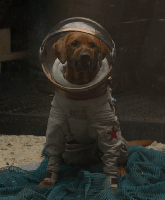 A brown dog in a space suit and space helmet appears to growl.